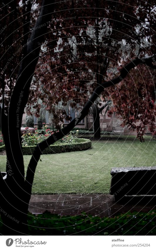 Tree Meadow Autumn Lanes & trails Park Rain Wet Damp Rainwater Bad weather