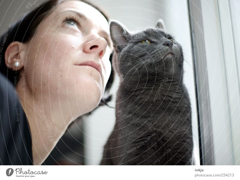 you and I Leisure and hobbies Living or residing Flat (apartment) Woman Adults Life Face 1 Human being Pet Cat british shorthair Animal Observe Think Looking
