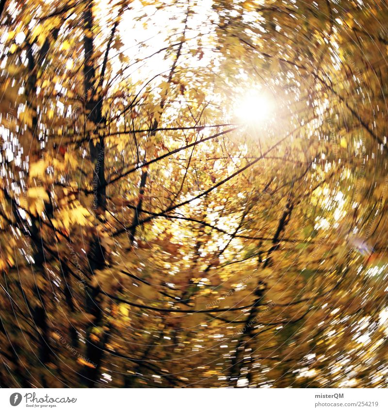 Nature Sun Yellow Autumn Art Contentment Hiking Esthetic Autumn leaves Diffuse Autumnal Swirl Vertigo Early fall Autumnal colours Leaf canopy