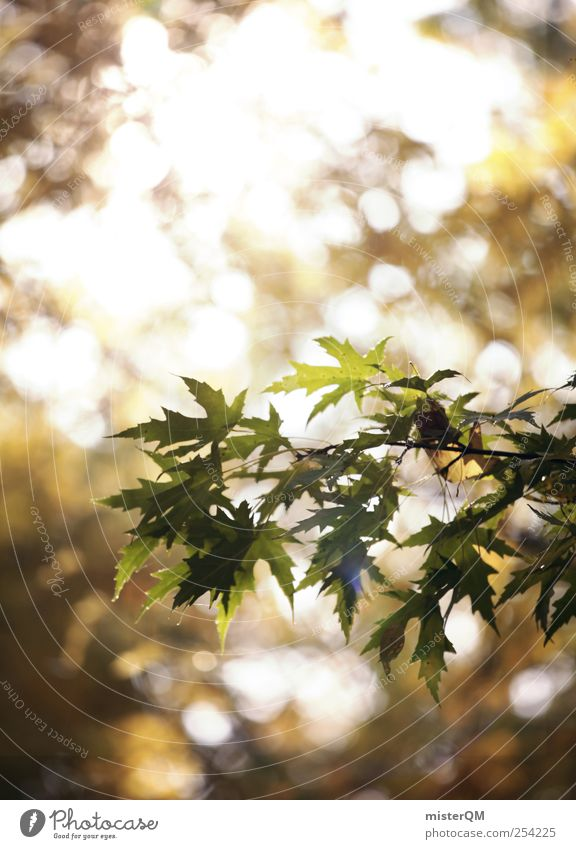 Nature Green Tree Plant Forest Yellow Autumn Environment Contentment Natural Esthetic Branch Idyll Twig Autumn leaves Visual spectacle