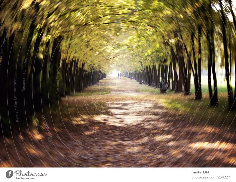 Nature Leaf Loneliness Relaxation Autumn Park Art Contentment Leisure and hobbies Wind Together Esthetic To go for a walk Idyll Autumn leaves Doomed