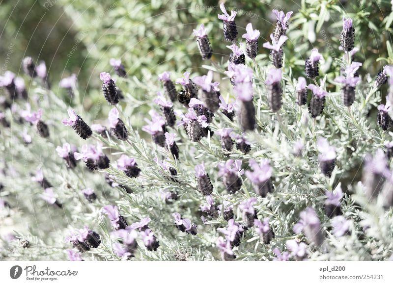 Nature Green Plant Flower Blossom Spring Contentment Natural Violet Joie de vivre (Vitality) Fragrance Wild plant