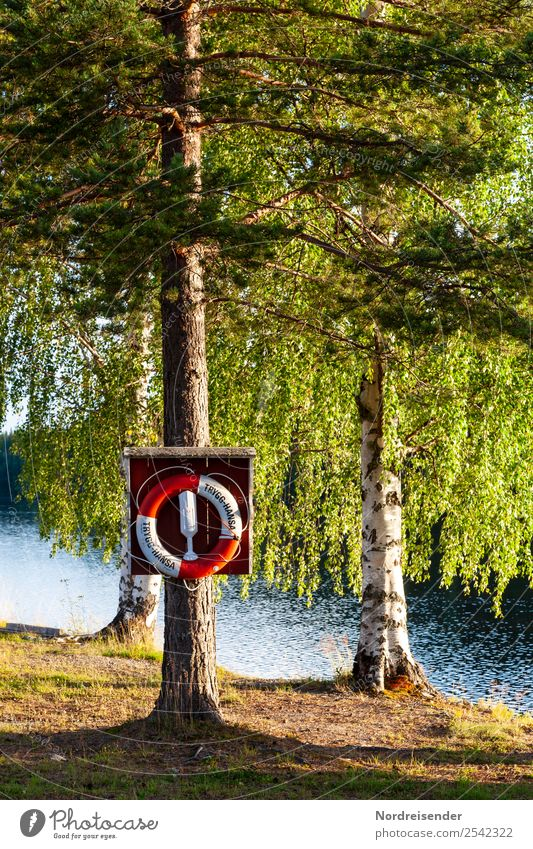 Swimming lake in Sweden Vacation & Travel Tourism Camping Summer Summer vacation Sun Water Beautiful weather Tree Forest Lakeside Swimming & Bathing Calm