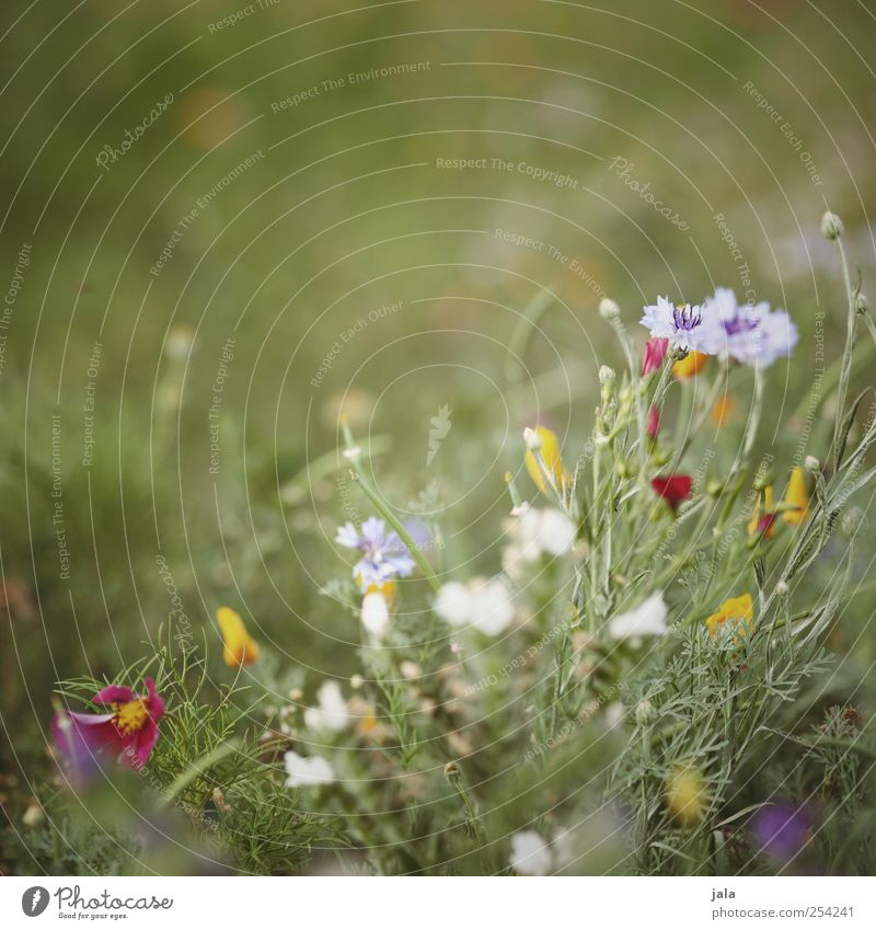 wildflower bee meadow Environment Nature Plant Summer Flower Grass Blossom Wild plant Meadow Beautiful Colour photo Exterior shot Deserted Copy Space top Day