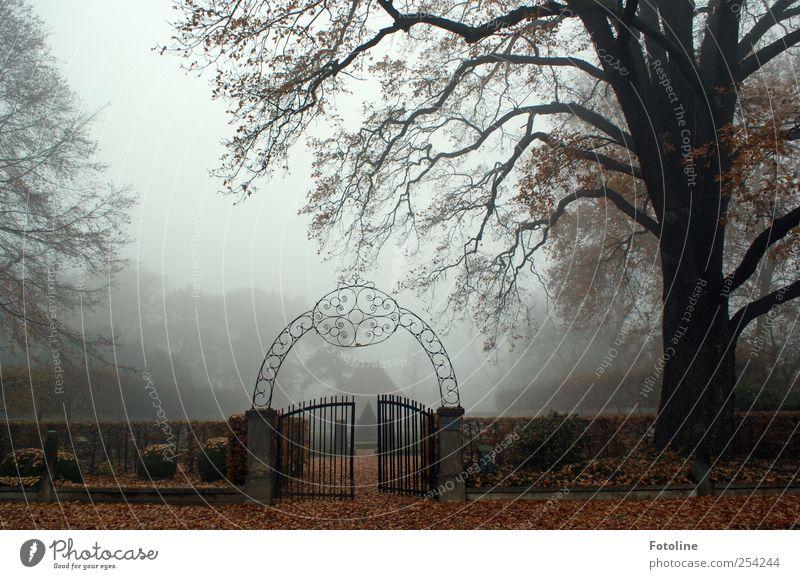 Nature Tree Plant Dark Autumn Environment Landscape Garden Park Fog Open Natural Branch Gate Hedge Iron gate