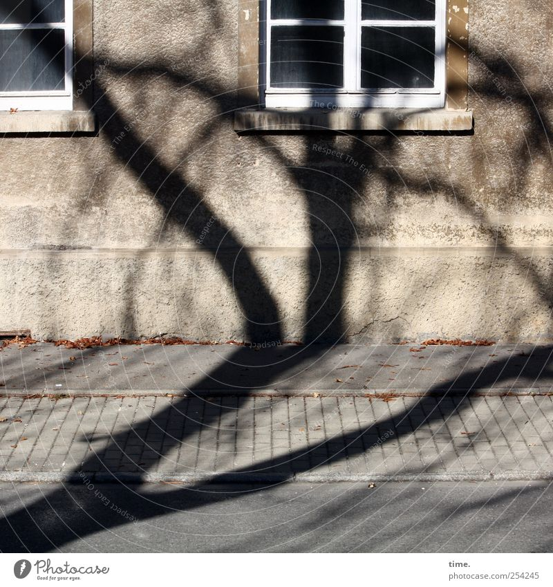 TreeHouse (Reprise) | ChamanSülz House (Residential Structure) Environment Wall (barrier) Wall (building) Facade Window Stress Chaos Surprise Apartment Building