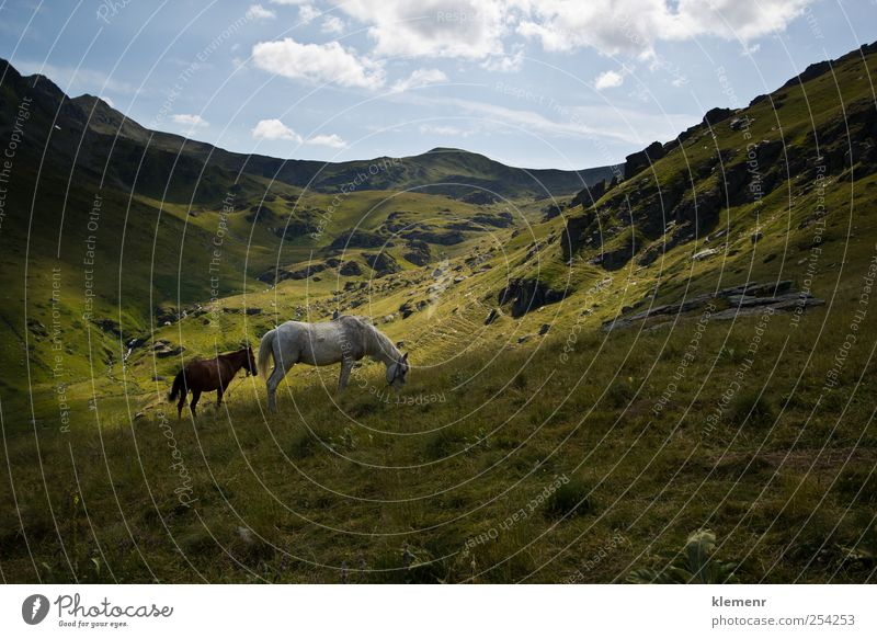 Horses in green mountain valley Nature Green Beautiful Vacation & Travel Animal Happy Moody Contentment Elegant Pair of animals Adventure Fresh Esthetic