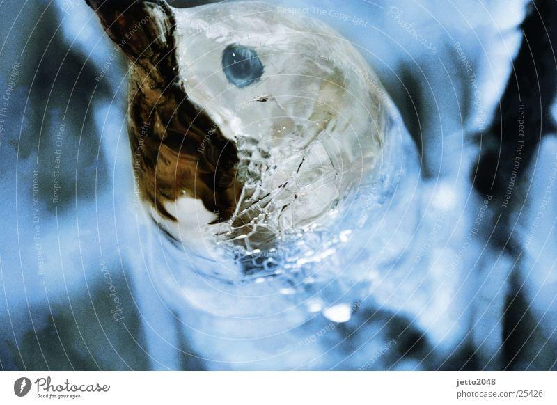 The Eistier Bird Dolphin digital processing Ice Fish