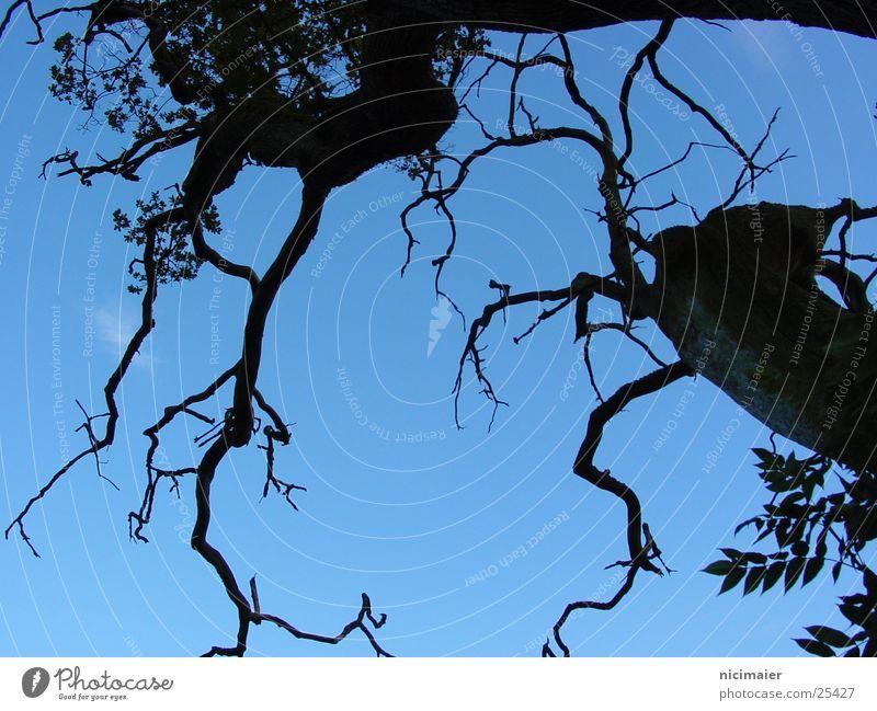 tree Creepy Tree Dark Sky Branch Twig