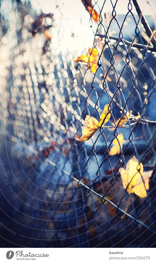 Prison break Environment Plant Autumn Leaf Park Street Metal Rust Yellow Maple tree Maple leaf Fence Captured Hang Autumnal Autumn leaves October Orange Lamp