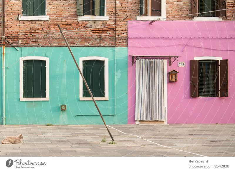 Cat Vacation & Travel Old Green House (Residential Structure) Animal Calm Window Wall (building) Building Tourism Wall (barrier) Exceptional Pink Trip Retro
