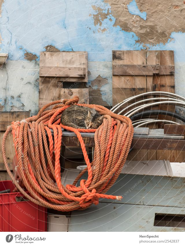 taking a nap Wall (barrier) Wall (building) Cat 1 Animal Orange Pulley Rope Sleep Sleeping place Siesta Street cat Rest Colour photo Multicoloured Exterior shot