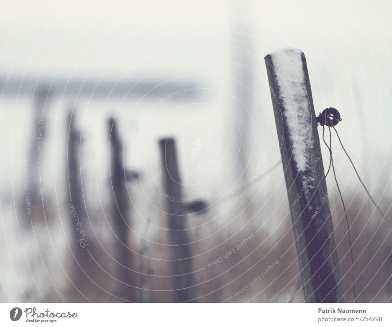 Nature White Joy Winter Calm Loneliness Life Snow Wood Snowfall Field Leisure and hobbies Ice Wild Dangerous Gloomy