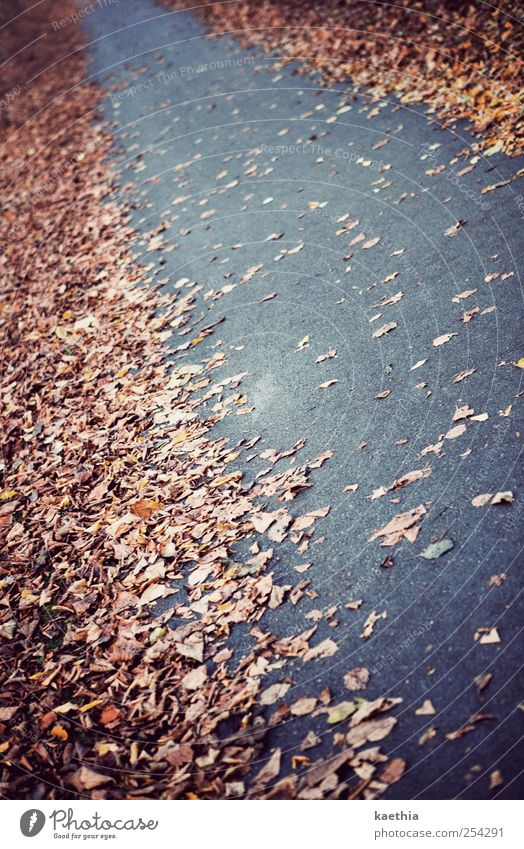 Nature Tree Plant Leaf Yellow Street Autumn Lanes & trails Park Brown Earth Going Glittering Gold Concrete To go for a walk