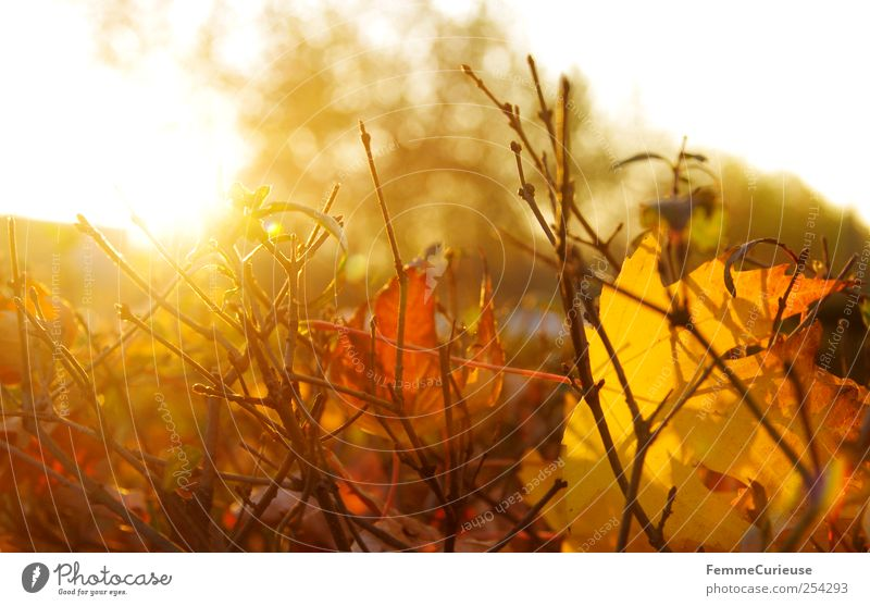 Autumn sun. Gardening Agriculture Forestry Retirement Closing time Nature Landscape Sunrise Sunset Sunlight Winter Bushes Park Village Small Town Breathe