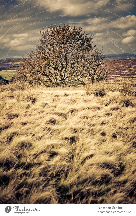 Peak District IV Environment Nature Landscape Plant Sky Horizon Climate Weather Beautiful weather Wind Brown Gold Contentment Freedom Field Exterior shot Meadow