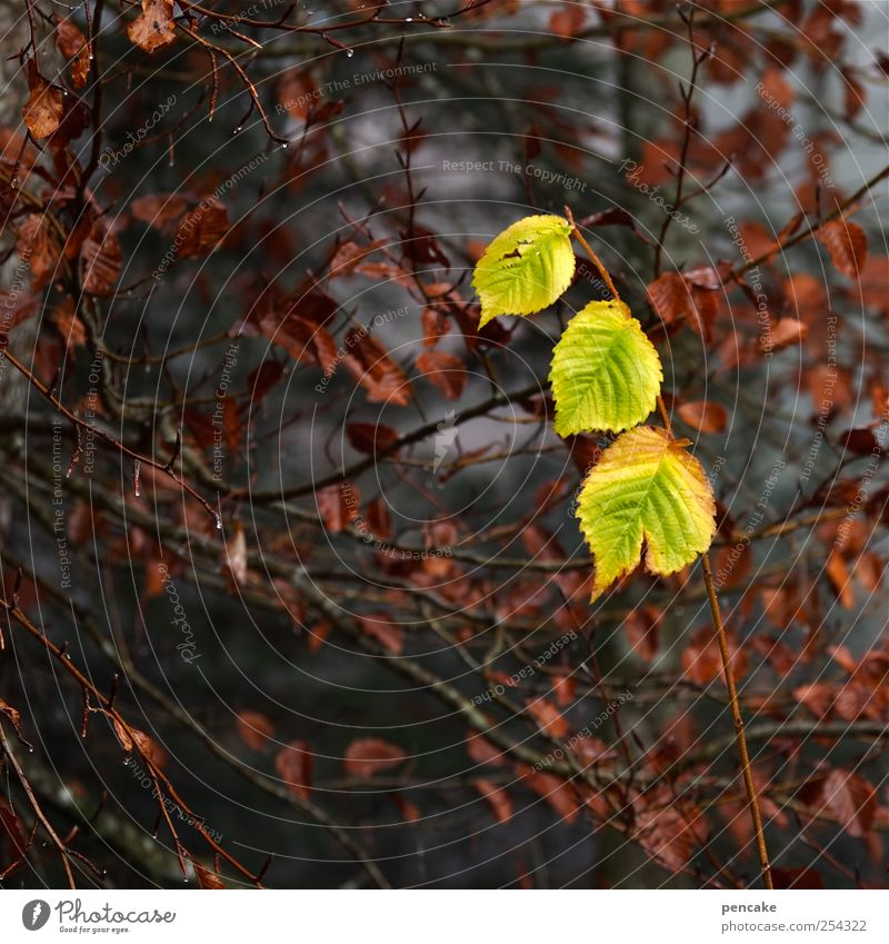 Nature Plant Beautiful Tree Leaf Autumn Happy Moody Together Contentment Drops of water Joie de vivre (Vitality) 3 Sign Attachment Surprise