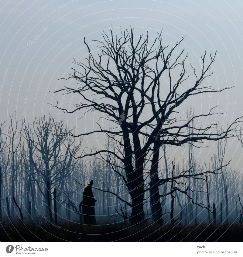 Nature Blue Tree Plant Loneliness Black Forest Dark Autumn Death Environment Landscape Wood Sadness Rain Fear