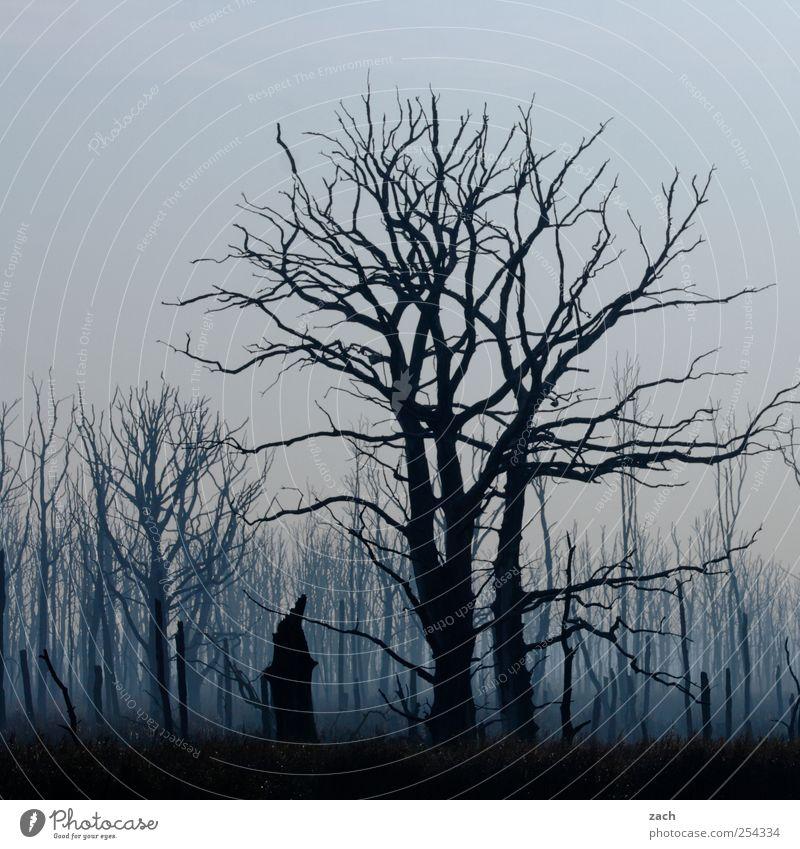 Nature Blue Tree Plant Loneliness Black Forest Dark Autumn Death Environment Landscape Wood Sadness Rain Fear