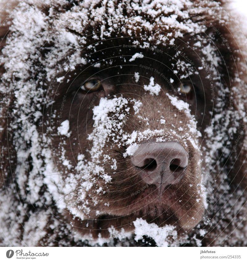 Dog Animal Eyes Baby animal Animal face Pelt Watchfulness Mammal Pet Snout Loyalty Snowflake Puppy Snow Watchdog