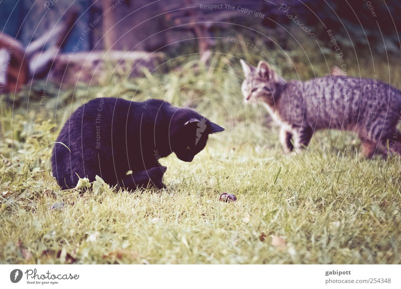 Cat Nature Joy Animal Baby animal Meadow Movement Lanes & trails Playing Garden Contentment Pair of animals Walking Free Growth Cute