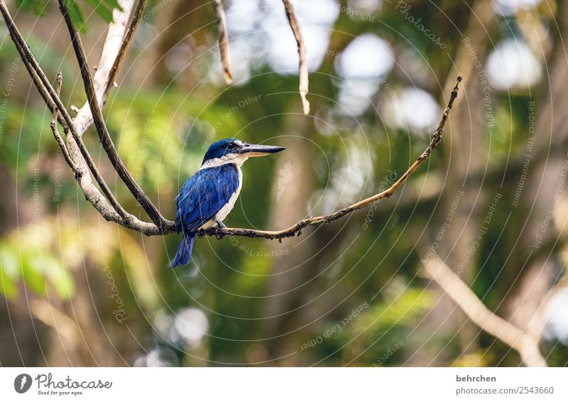 Vacation & Travel Nature Blue Beautiful Tree Animal Leaf Far-off places Tourism Exceptional Freedom Bird Trip Wild animal Adventure Feather