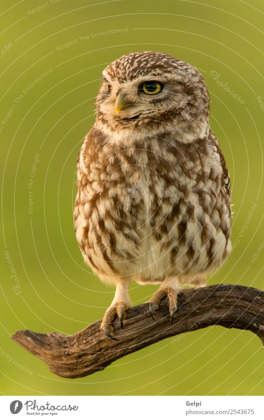 Bird Beautiful Nature Animal Forest Wing Small Funny Natural Cute Wild Brown Yellow Gold Green Black White wildlife Owl Prey predator sunny branch Hunter Beak