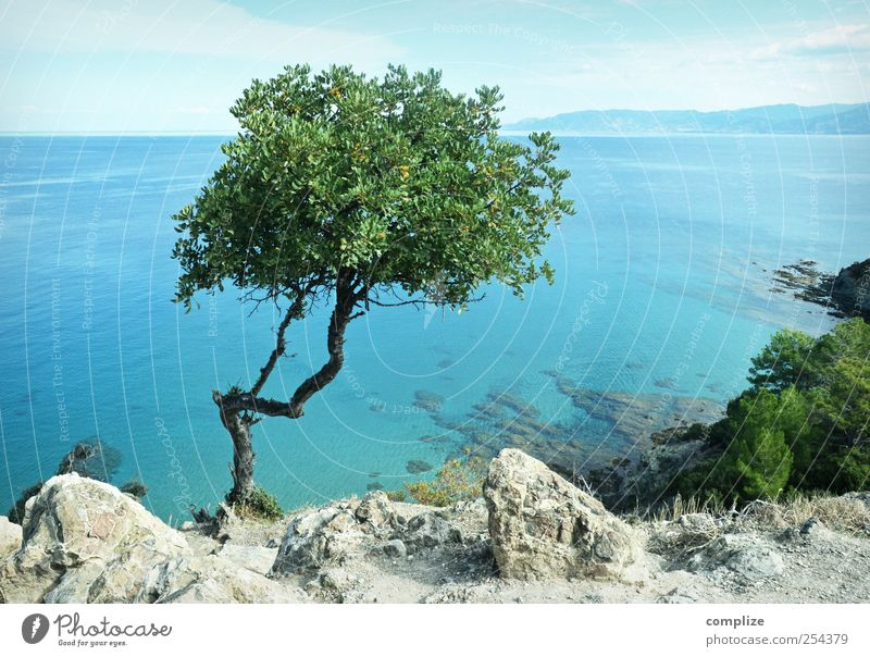 Sky Nature Blue Green Tree Sun Vacation & Travel Summer Ocean Beach Calm Far-off places Relaxation Freedom Landscape Coast