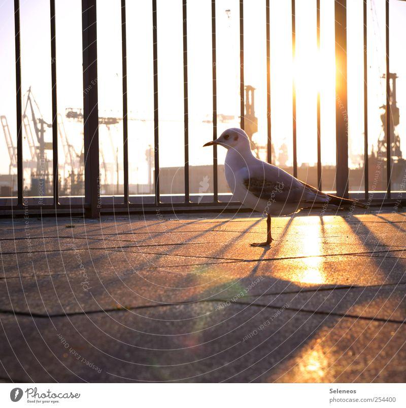 Evening sunbathing Vacation & Travel Freedom Sightseeing Environment Nature Cloudless sky Navigation Inland navigation Harbour Animal Wild animal Bird