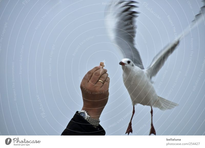 Sky Man Hand Animal Bird Flying Wild animal Clock Wing Contact Animal face Ring Seagull Cloudless sky Lure Partially visible