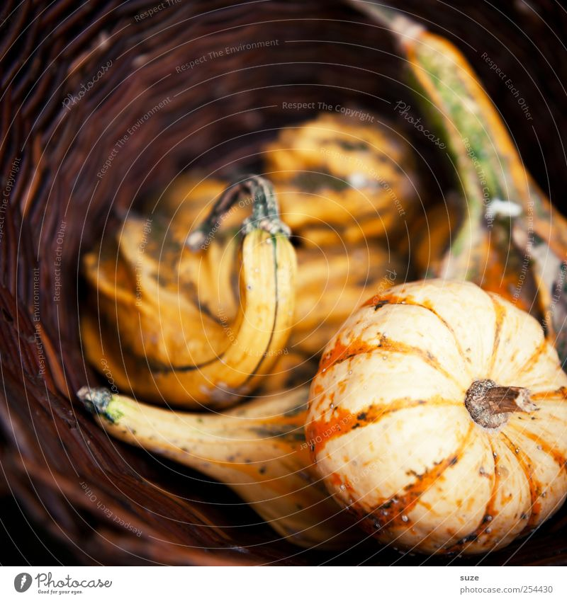pumpkin basket Food Vegetable Organic produce Vegetarian diet Healthy Eating Thanksgiving Hallowe'en Autumn Authentic Natural Brown Pumpkin Basket