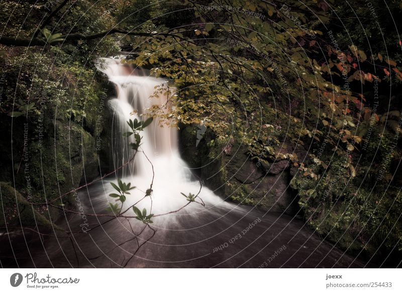 Nature Water Loneliness Forest Emotions Power Beginning Romance Idyll Brook Waterfall