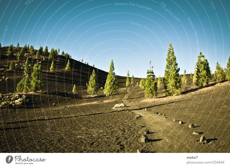 Blue Green Tree Black Forest Landscape Lanes & trails Dry Beautiful weather Volcano Cloudless sky Sparse Tenerife Stone pine Teide Lava field