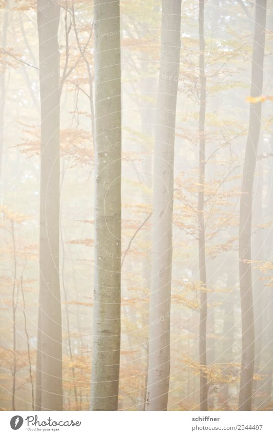 Blurred Forest II. Nature Autumn Bad weather Fog Plant Tree Yellow Automn wood Bright Diffuse Deserted