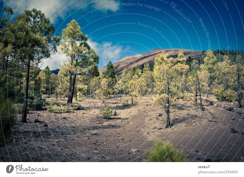 no grass land Landscape Sky Clouds Forest Rock Peak Lanes & trails Hiking Dry Blue Brown Green Sparse Tenerife Stone pine Lava field Teide Colour photo