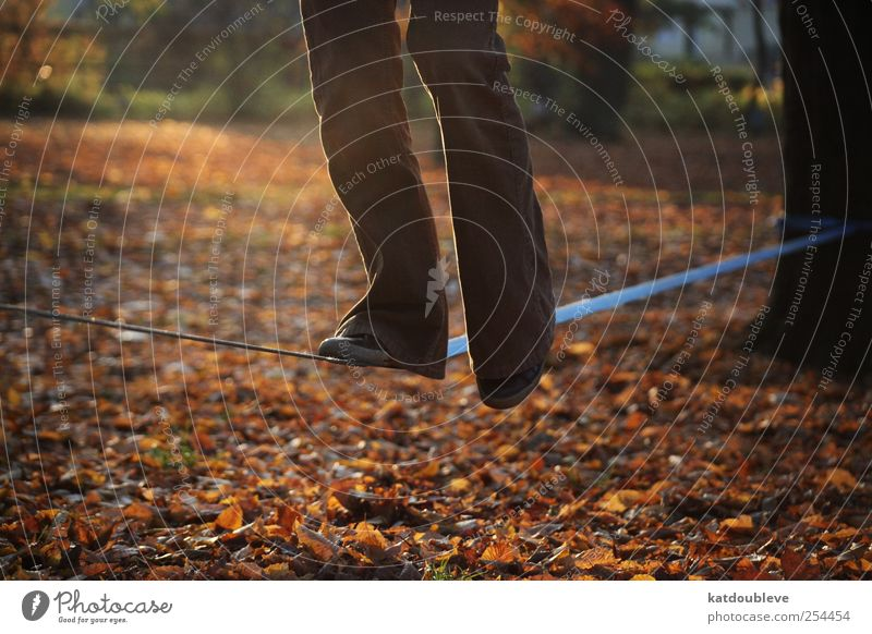 balance Legs Feet Circus Nature Autumn Tree Leaf Park Movement Tall Above Brown Gold Self-confident Optimism Safety Serene Patient Calm Self Control