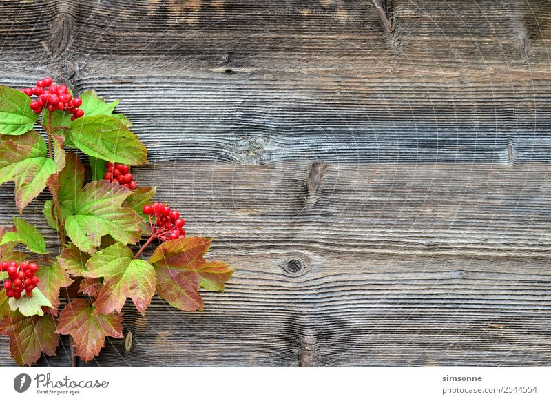 coloured foliage on a wooden background Handicraft Summer Nature Plant Autumn Flower Leaf Wood Blue Red Background picture Berries viburnum Beech tree Dahlia