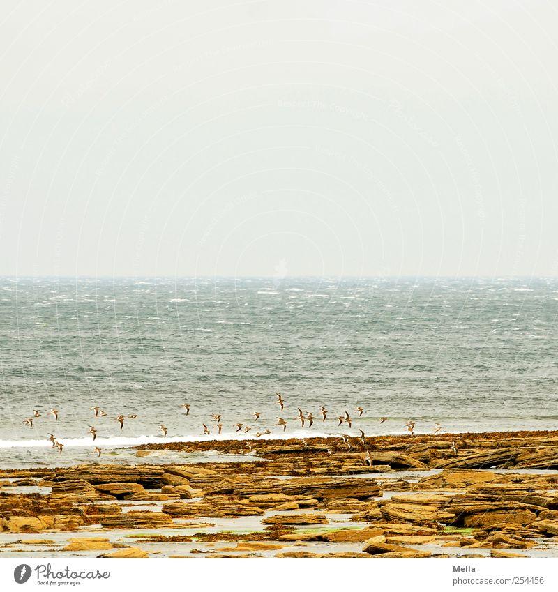 north coast Environment Nature Landscape Water Rock Coast Ocean Bird Flock Flying Far-off places Infinity Natural Moody Wanderlust Horizon Vacation & Travel