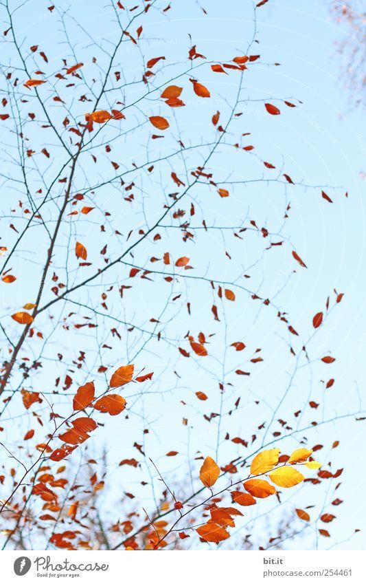 through the autumn with a swing Harmonious Relaxation Calm Meditation Thanksgiving Nature Plant Sky Autumn tree bushes Garden Park Illuminate Blue Brown Yellow