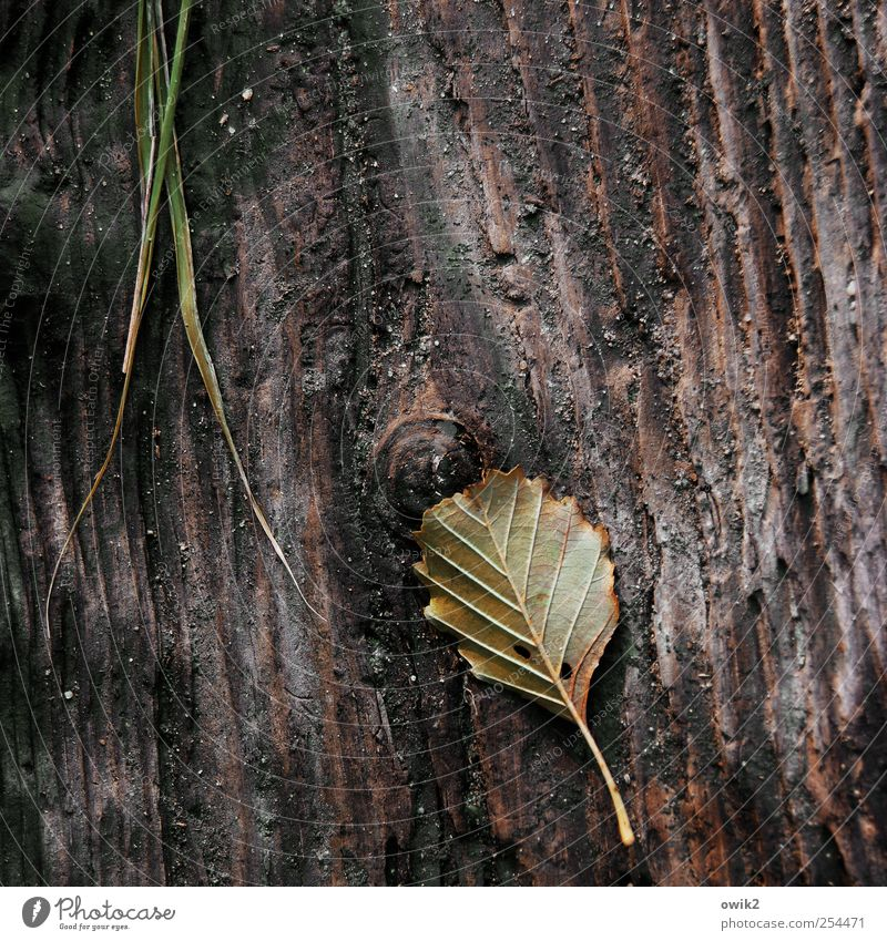 Nature Plant Leaf Calm Dark Environment Wood Grass Sadness Small Lie Natural Wild Gloomy Grief Elements
