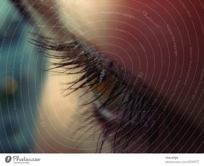 got it in my sights Eyes Observe Glittering Looking Dream Feminine Emotions Moody Trust Safety Safety (feeling of) Secrecy Infatuation Beautiful Patient Calm