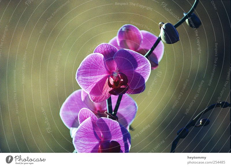 orchid Elegant Exotic Joy Happy Beautiful Well-being Contentment Relaxation Fragrance Environment Nature Landscape Plant Sunlight Spring Summer Autumn Flower
