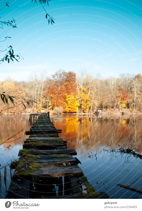 No bathing weather Environment Nature Landscape Water Sky Cloudless sky Sun Autumn Weather Beautiful weather Tree Forest Lakeside Pond Footbridge Blue Brown