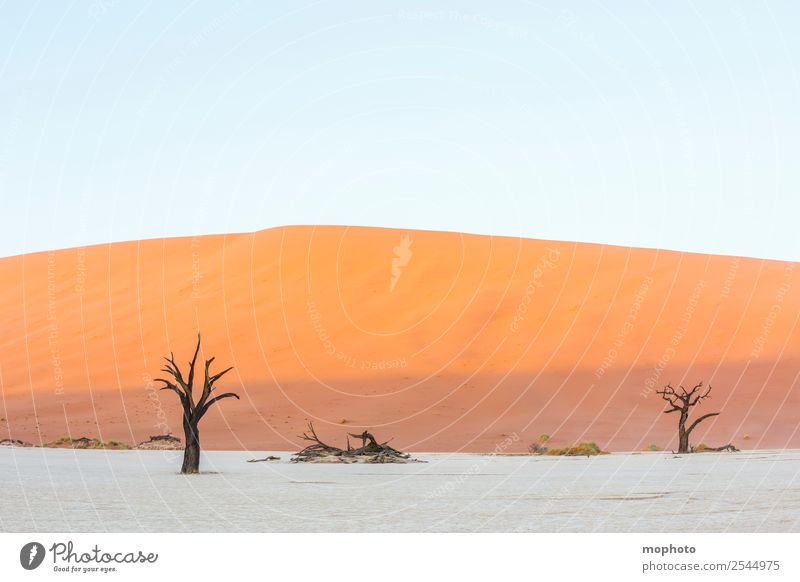 Deadvlei comes to life Vacation & Travel Tourism Adventure Far-off places Safari Environment Nature Landscape Earth Sand Climate Warmth Drought Tree Desert