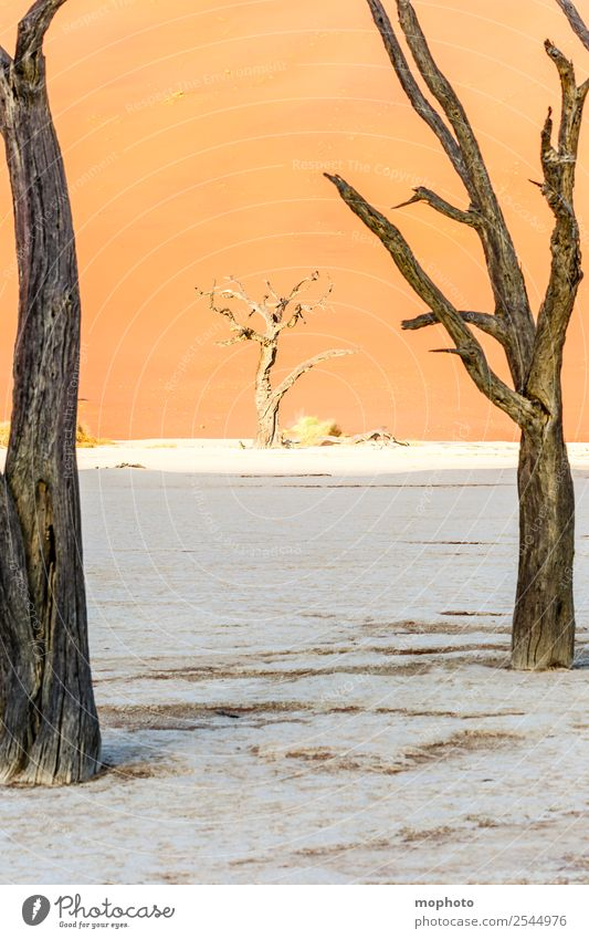 Nature Vacation & Travel Landscape Tree Loneliness Far-off places Warmth Environment Senior citizen Tourism Orange Brown Sand Adventure Transience Climate