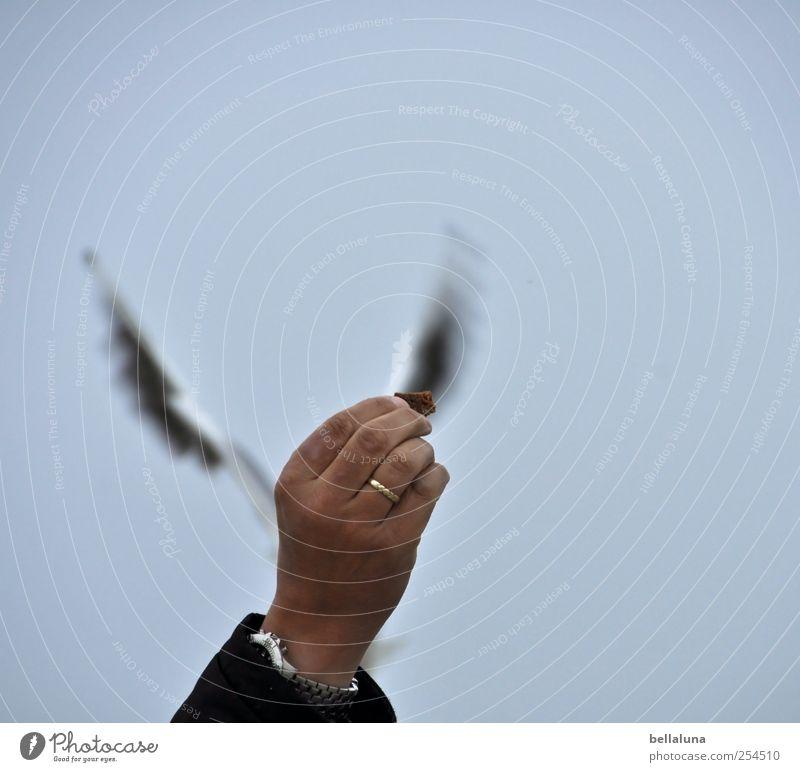 Hand Animal Bird Flying Wild animal Fingers Wing Ring Seagull Lure Feeding Gull birds Wedding band Breadcrumbs Bright background