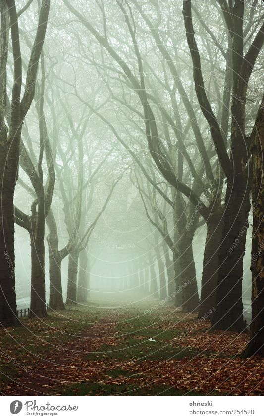 Königsallee Autumn Weather Fog Tree Branch Deserted Lanes & trails Avenue Creepy Dream Grief Death Fatigue Longing Loneliness Fear Fear of the future Eternity