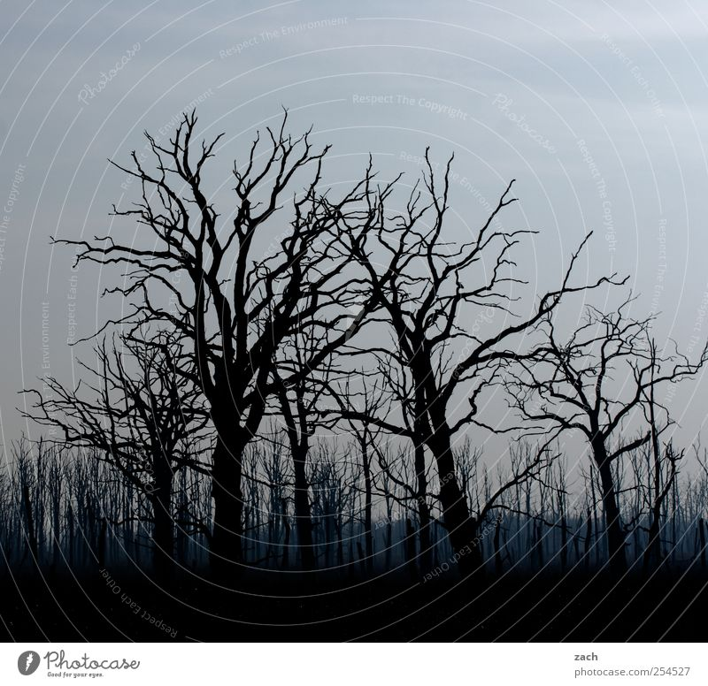 Nature Blue Tree Plant Winter Black Forest Dark Autumn Death Environment Landscape Wood Sadness Fear Fog