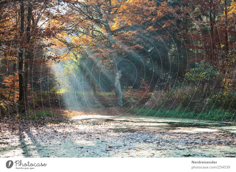 Ponds in the forest Relaxation Calm Meditation Trip Nature Landscape Sunlight Autumn Forest Stripe Fragrance Multicoloured Hope Belief Colour Moody Transience