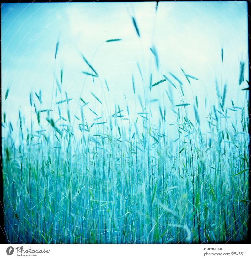 Nature Plant Summer Nutrition Food Moody Art Field Leisure and hobbies Natural Growth Lifestyle Grain Agriculture Luxury Harvest